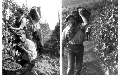 Fire gode fra Franco Francesco i Piemonte.